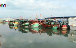 Bà Rịa - Vũng Tàu thực hiện chống khai thác thủy sản trái phép