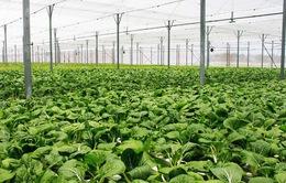 36.490 tỷ đồng cho phát triển nông nghiệp hữu cơ