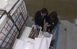 Hàn Quốc tăng cường giám sát thủy sản nhập khẩu