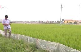 Tiềm năng phát triển nông nghiệp hữu cơ tại Việt Nam