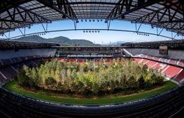 Áo: Biến sân vận động thành rừng cây