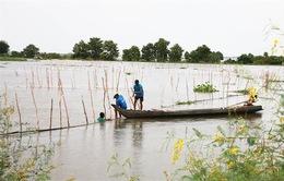 Nước lũ sắp về Đồng bằng sông Cửu Long