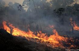 Các nước nỗ lực đối phó với cháy rừng Amazon