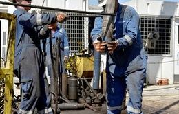 Giá dầu mỏ tiếp tục ổn định