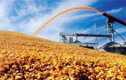 Nông sản hầu hết đang giảm điểm