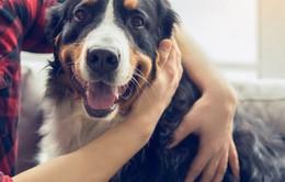 Dịch vụ chăm sóc thú cưng - Ngành kinh doanh phát triển tại Pháp