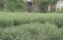 Đà Nẵng được mùa hoa Tết