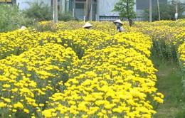 Trà Vinh: Hoa Tết được giá