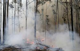 Australia chi 34 triệu USD cứu động vật hoang dã và môi trường