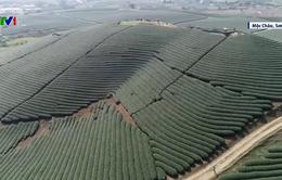 Chiêm ngưỡng cảnh sắc thiên nhiên Mộc Châu qua Giải Marathon đường mòn Việt Nam 2020