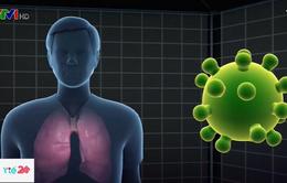 Phác đồ hướng dẫn và điều trị viêm phổi do virus Corona