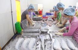 Hậu Giang chuẩn bị hàng trăm tấn cá thác lác tẩm gia vị phục vụ Tết