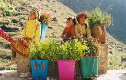 Sắc vàng hoa cải sưởi ấm Hà Giang ngày đông