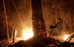Brazil: Diện tích rừng Amazon bị chặt phá lớn nhất trong 5 năm qua