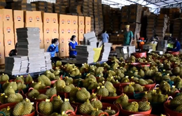 Kim ngạch xuất nhập khẩu Việt Nam - Trung Quốc đạt gần 117 tỷ USD