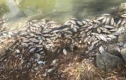 Tro bụi cháy rừng khiến cá chết  hàng loạt ở Australia