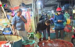Chợ cá lớn nhất Hà Nội nhộn nhịp cận ngày lễ ông Công ông Táo