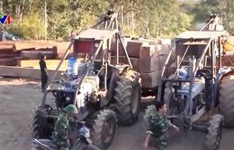 Gia Lai: Hàng chục cán bộ bị kỷ luật vì buông lỏng bảo vệ rừng