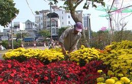 Người dân Cần Thơ không chờ tới 30 Tết để mua hoa