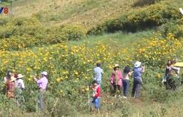 Gia Lai: Du lịch cộng đồng khởi sắc mùa Tết