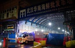 Phát hiện lượng lớn virus corona ở chợ hải sản Vũ Hán