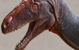 Chính thức công nhận loài khủng long ăn thịt khổng lồ mới