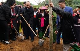 Thủ tướng phát động Tết trồng cây