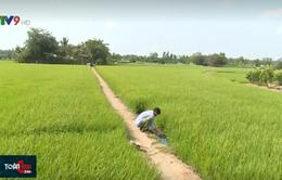 Bảo vệ sản xuất nông nghiệp, ổn định đời sống người dân trước mặn xâm nhập