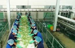 Tăng cường dự trữ, chế biến để ổn định thị trường nông sản trước dịch Corona