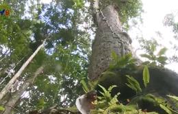 Du lịch sinh thái từ vốn rừng