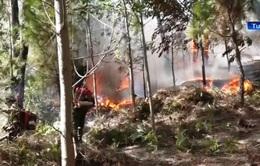Truy tặng Huân chương Dũng cảm cho người chữa cháy rừng