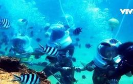 Chứng nhận kỷ lục công viên san hô đầu tiên tại Việt Nam