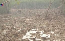 Cần xử lý nghiêm vụ phá 7.500m2 rừng phòng hộ ở Thái Bình