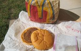 Bánh hamburger hơn 20 năm vẫn... mới nguyên