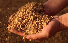 Gần 40 tấn hạt giống được xuất cấp miễn phí cho các tỉnh miền Trung