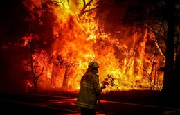 Australia đã có mưa lớn, thảm họa cháy rừng vẫn có thể quay lại