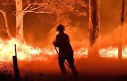 Giữa tâm bão cháy rừng, Australia liên tiếp phát hiện các vụ cố ý phóng hoả
