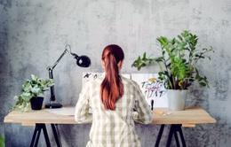 Đặt chậu cây trên bàn làm việc giúp giảm căng thẳng