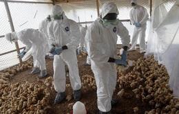 Phát hiện ổ dịch cúm gia cầm H5N1 ở miền Trung Ấn Độ