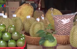 Đắk Lắk: Khai mạc Hội chợ thương mại nông nghiệp trái cây năm 2020