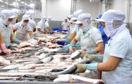 Cá tra loay hoay tìm thị trường tiêu thụ nội địa