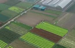 Làm sao để thúc đẩy tín dụng vào nông nghiệp công nghệ cao?