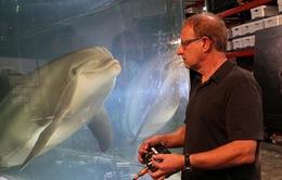 """Thủy cung trong tương lai có thể sẽ chỉ còn """"cá heo robot"""""""