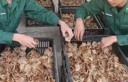 9.000 gà giống, 20.000 trứng gia cầm nhập lậu bị thu giữ