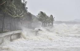 Bão số 8 là cơn bão có đường đi hết sức phức tạp