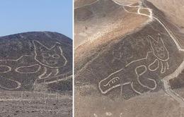 Phát hiện hình vẽ mèo khổng lồ nghìn tuổi nằm vắt vẻo giữa sa mạc