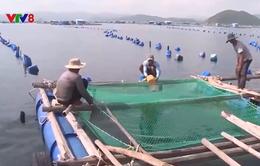 Phú Yên: Sẽ cưỡng chế nếu ngư dân ở lại trên bè và tàu cá