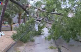 Các tỉnh miền Trung, Tây Nguyên thiệt hại về người và của do bão số 9