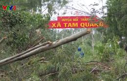 Bão số 9 gây thiệt hại nặng vùng ven biển Quảng Nam