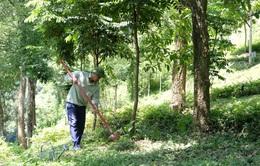 """Chung tay để """"triệu cây vươn cao cho Việt Nam xanh"""""""
